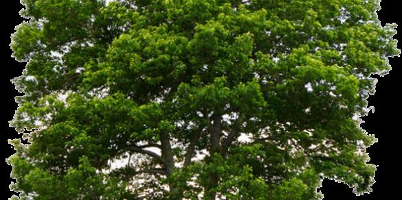 Parcs et jardins:  Plus qu'un besoin, une nécessité!